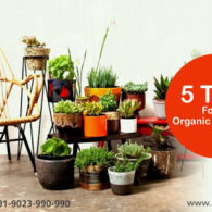 Top 5 Tips For an Organic Home Life